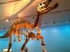 в музее -  Royal Ontario Museum