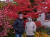 очень красивое красное дерево